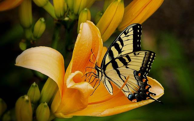 foto van een vlinder